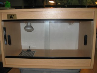 How To Set Up A Simple Vivarium
